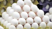 قیمت روز تخم مرغ گران می شود ؟
