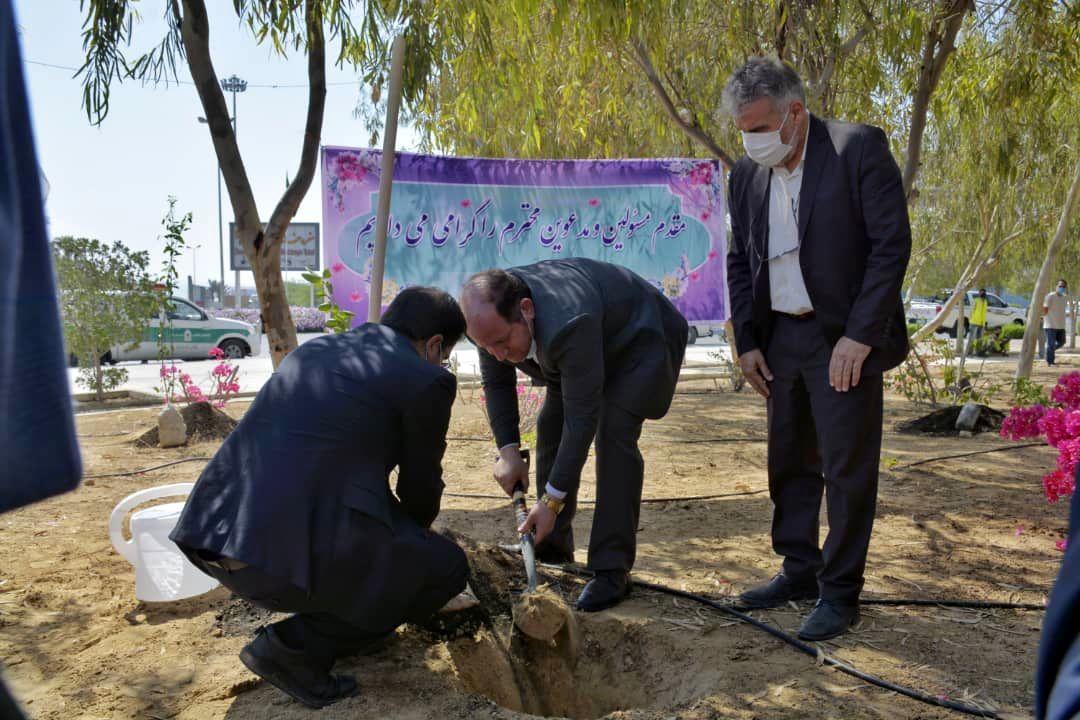 *توزیع رایگان بیش از 2 هزار اصله نهال به مناسبت روز درختکاری در قشم*